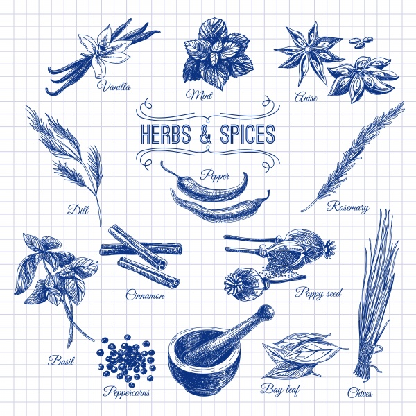 Hand drawn herbs and spices ((eps (26 files)