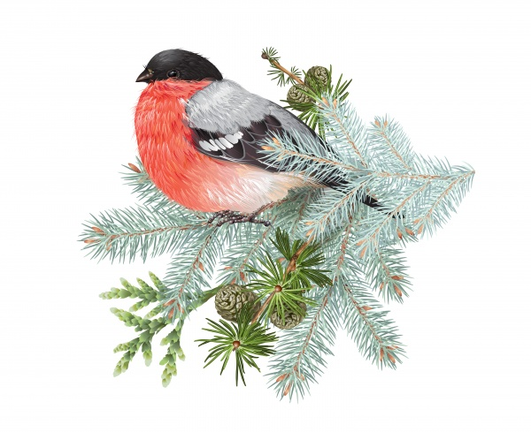 Winter vector frame design for greeting card with forest branches and bullfinch, Christmas party invitation ((eps (16 files)